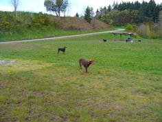 and of course my dobies love this park too!!!