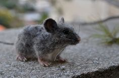 Needle Felted Mouse. Gray Mouse. Real size . by darialvovsky