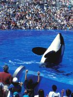 SeaWorld's Orca Shows Could End With A New Federal Bill #refinery29