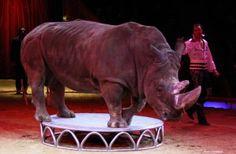 Applaud Website for Raising Awareness of Animal Abuse