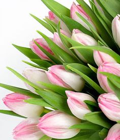 tulip bouquets - Yahoo Image Search Results