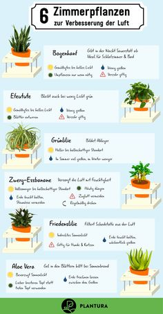 Air-cleaning plants: The Top 10 - Plantura - 6 houseplants to improve the air: With these plants, your stuffy indoor climate and harmful fumes w - Air Cleaning Plants, Air Plants, Indoor Plants, Garden Care, Rotation Des Cultures, Decoration Bedroom, Plants Are Friends, Bathroom Plants, Interior Garden