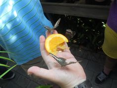 Butterfly exhibit at Carleton University in October. That is my hand with three butterflies on it.
