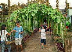 Vegetable Garden Design: DIY Bean Trellis – Gardenista - New ideas Fruit Garden, Edible Garden, Garden Plants, Bean Trellis, Garden Trellis, Homestead Gardens, Farm Gardens, Vegetable Garden Design, Raised Garden Beds