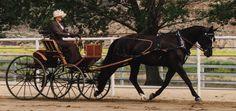 "Tejon Ranch Pleasure Carriage Driving Show, June 2013. Warmblood mare ""Diva"", driven by Marcia Fetherston. Photo by Marc Delio"