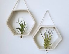 Air plant holder Recycled bottle sconce Green with by glassetc