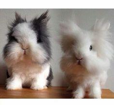 Squeeeee!!!   Cuteness overload!!!