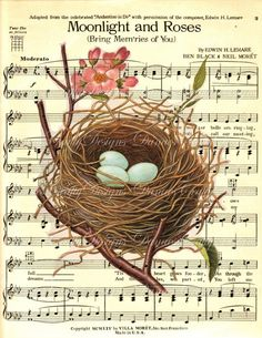 Holiday Sale - Robins Nest - Vintage Botanical Print on Sheet Music Background - A11 - Digital Download