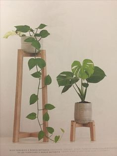 Stylish 30 Popular Indoor Plant Stands Ideas For Fresh Home Inspiration Cool Plants, Potted Plants, Indoor Plants, Porch Plants, Indoor Garden, Garden Plants, Modern Plant Stand, Diy Plant Stand, Planet Decor