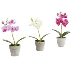 If two are better than one, then three are best, and our set of three pretty, potted faux orchids is just that. Spread them out around the house to add natural elegance to all your spaces, or put them together for triple the impact.