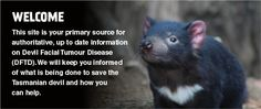 Welcome. This site is your primary source for authoritative, up to date information on Devil Facial Tumour Disease (DFTD). We will keep you informed of what is being done to save the Tasmanian devil and how you can help.