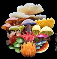 A rainbow of Fungi. Photo illustration by Taylor Lockwood. Mushroom Art, Mushroom Fungi, Flowers Nature, Beautiful Flowers, Mushroom Pictures, Posca Art, Patterns In Nature, Mellow Yellow, Natural Wonders