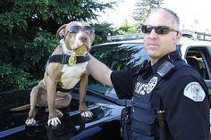 Pit bull K-9 officer, great story
