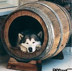 Dog house made from an old wine barrel