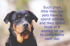 Dog Quote - Such short little lives out pets have to spend with us and they spend most of it waiting for us to come home each day