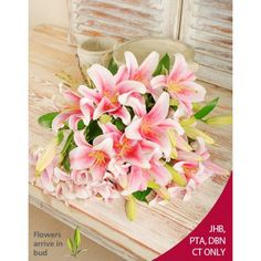 A Bouquet of fragrant oriental Stargazer lilies delicately wrapped in cellophane and tied with a bow, available for same day delivery in South Africa. Beautiful Flower Arrangements, Beautiful Flowers, Wedding Bouquets, Wedding Flowers, Wedding Stuff, Wedding Ideas, Stargazer Lily Bouquet, Flower Decorations, Wedding Decorations