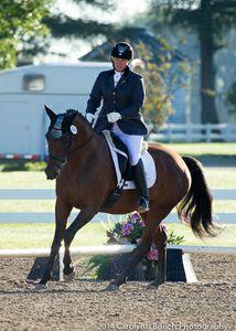 Winterlilie- a 2nd Level, Hanoverian mare