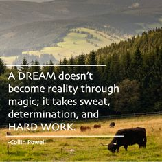 A #dream doesn't become reality through magic; it takes sweat, determination, and #hardwork #quote