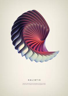 Haliotis Art Print