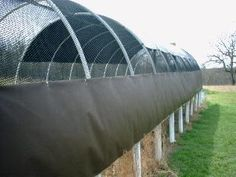 Check out http://QUAILRANCH-OK.COM!  Specializing in Superior Bobwhite Quail and Bobwhite Baby Chicks is What We Do!