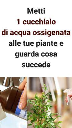 #acquaossigenata #piante