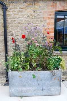 Quick To Build Moveable Greenhouse Options Travel: Hauser and Wirth Somerset - Cate St Hill Small Courtyard Gardens, Back Gardens, Small Gardens, Outdoor Gardens, City Gardens, Container Plants, Container Gardening, Somerset Garden, Garden Planters