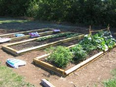 For centuries, wise gardeners have known that crop rotation is one of the best organic ways to have healthy vegetable gardens. If you're growing food at home, here's what you need to know about rotating your crops.
