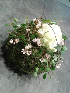 Moss ball for the Friedwald Advantages Of Watermelon, Kinds Of Salad, Fake Flowers, Free Food, Flower Arrangements, Floral Design, Floral Wreath, Wreaths, Plants