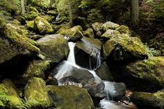 La Selva Nega, Alemania