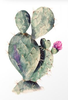 Beautiful cactus.