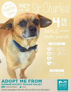 "SIR CHARLES! : Who needs an ""adoption floor"" when you have excellent promos like this?! Way to go HSSV!"