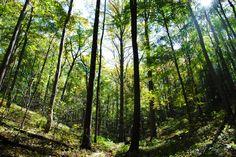 Chestnut Lead trail