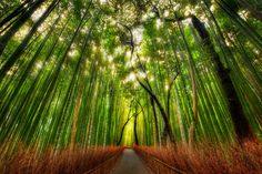The Bamboo Forest by Trey Ratcliff | Separation of color is lovely. The glow at the top is a little much, but it's still lovely.