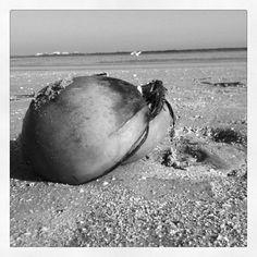 Just a coconut on the beach. CaribbeanTravelBlog