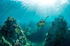 13 Reasons to Become a Certified Scuba Diver