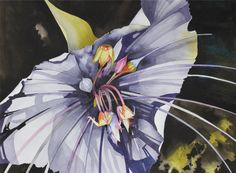 New Painting.....Art Original Watercolor Painting of Black BATWING ORCHID