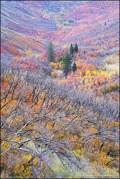 Monet's Valley - One of the most beautiful works by Monet. He drew a complete valley with its many details.