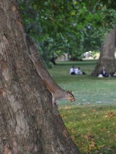A Terminator squirrel - or a Squibot - or just a bloodthirsty little animal?