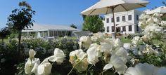 De Wetshof Celebrates South Africa`s Top Chardonnays South Africa, Wine, Celebrities, Plants, Top, Style, Celebs, Flora, Foreign Celebrities