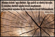 Müller Péter: Minden évünk: egy életkör. Egy gyûrû az életfa törzsén. És minden életkör végén kicsit... Old Wood, Picture Quotes, Inspirational Quotes, Pictures, Wood, Life Coach Quotes, Inspiring Quotes, Inspirational Quotes About, Drawings