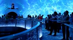 City of Dreams Macau - Dragon's Treasure - Falcon's Treehouse Attraction...