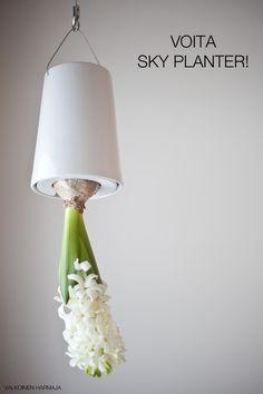 sky planter mit palme sky planter boskke pinterest. Black Bedroom Furniture Sets. Home Design Ideas