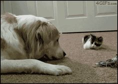 Share this Kitten Boops Dog, Tag You're It Animated GIF with everyone. Gif4Share…
