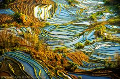 "Guilin Rice Terraces, Longji, China Located in southern China close to Vietnam, the Longji terraced rice fields cover an area of almost 20,000 acres and rise as high as 3,600 feet into the air. These fields, nicknamed the ""Dragon's Backbone"" because of their resemblance to scales, first appeared in this area around 1300 AD and take on a different appearance in every season, depending on the life cycle of the rice being grown."