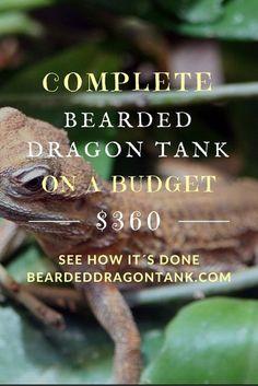 Bearded Dragon Habitat