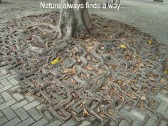 Nature always finds a way
