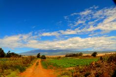 The road to Mauna Kea from Lalamilo farming area just outside of Waimea town by a mile...   one of my favorite spots on the island to photograph - any time, any day!  May Harrington Photography 2012