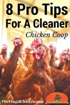 Raising chickens has gained a lot of popularity over the past few years. If you take proper care of your chickens, you will have fresh eggs regularly. You need a chicken coop to raise chickens properly. Use these chicken coop essentials so that you can. Portable Chicken Coop, Best Chicken Coop, Chicken Coop Plans, Building A Chicken Coop, Chicken Tractors, Small Chicken Coops, Chicken Garden, Raising Backyard Chickens, Backyard Poultry