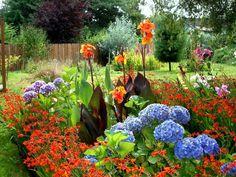 Canna lilies, hydrangeas, asiatic lilies, & Crocosmia for the border Sun Garden, Garden Trees, Summer Garden, Dream Garden, Garden Art, Garden Design, Garden Paths, Beautiful Flowers Garden, Beautiful Gardens