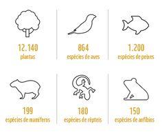 Espécies do Cerrado | WWF Brasil